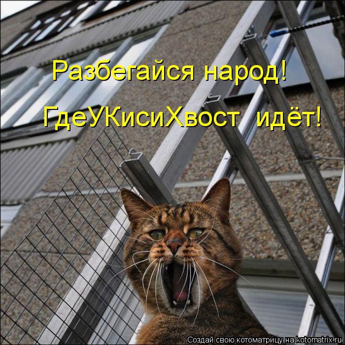 Котоматрица: Разбегайся народ! ГдеУКисиХвост  идёт!