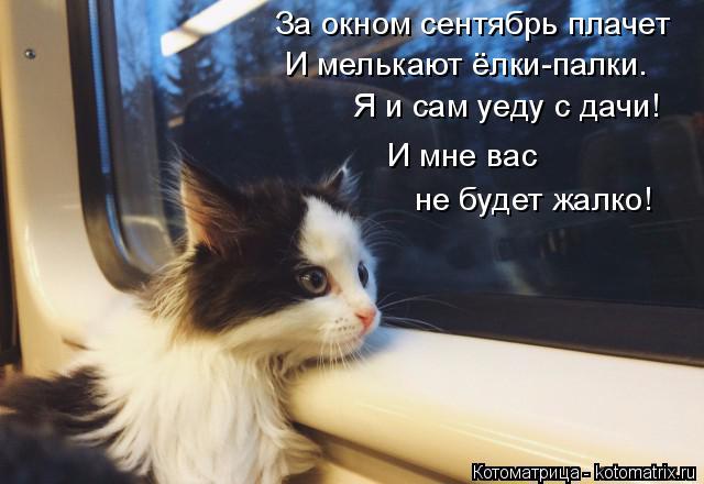 Котоматрица: За окном сентябрь плачет И мелькают ёлки-палки. Я и сам уеду с дачи! не будет жалко! И мне вас