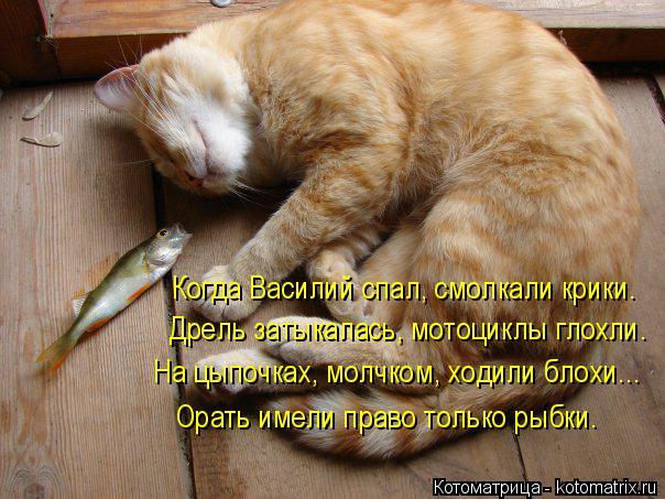Котоматрица: Когда Василий спал, смолкали крики. Дрель затыкалась, мотоциклы глохли. На цыпочках, молчком, ходили блохи... Орать имели право только рыбки.