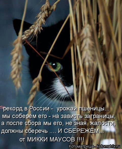 Котоматрица: рекорд в России -  урожай пшеницы... мы соберём его - на зависть заграницы, а после сбора мы его, не зная  жалости, должны сберечь .... И СБЕРЕЖЁМ..