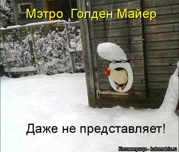 Котоматрица: Даже не представляет! Мэтро  Голден Майер