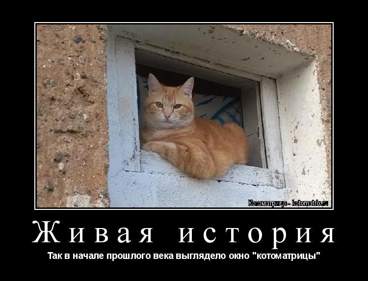 """Котоматрица: Живая история Так в начале прошлого века выглядело окно """"котоматрицы"""""""