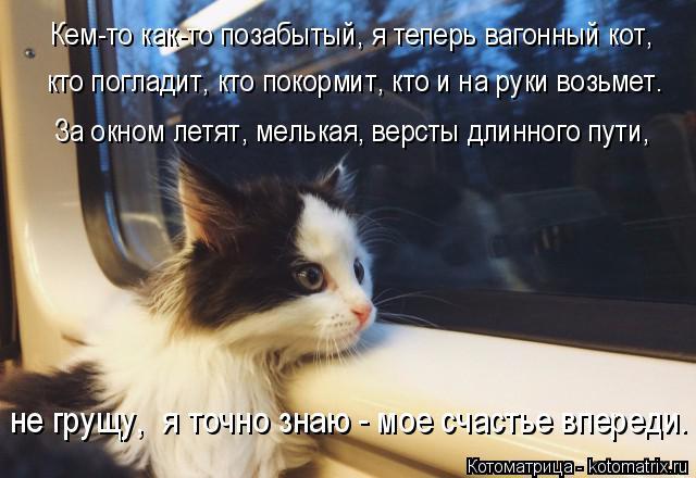 Котоматрица: кто погладит, кто покормит, кто и на руки возьмет. Кем-то как-то позабытый, я теперь вагонный кот, За окном летят, мелькая, версты длинного пут