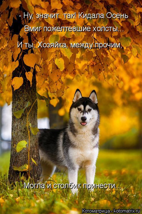 Котоматрица: - Ну, значит  так! Кидала Осень Вмиг пожелтевшие холсты...  И ты, Хозяйка, между прочим, Могла и столбик принести...