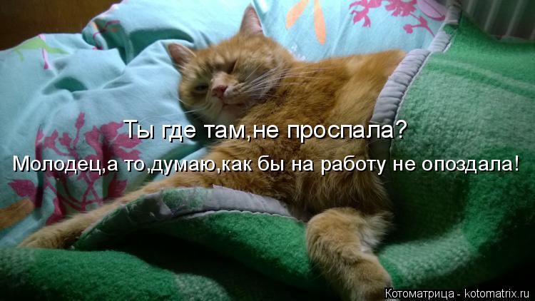 Котоматрица: Ты где там,не проспала? Молодец,а то,думаю,как бы на работу не опоздала!
