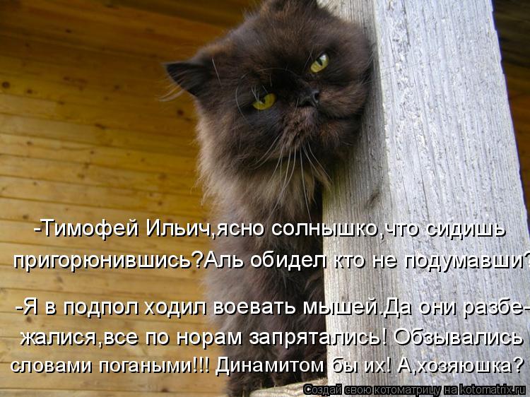 Котоматрица: -Тимофей Ильич,ясно солнышко,что сидишь пригорюнившись?Аль обидел кто не подумавши? -Я в подпол ходил воевать мышей.Да они разбе- жалися,все