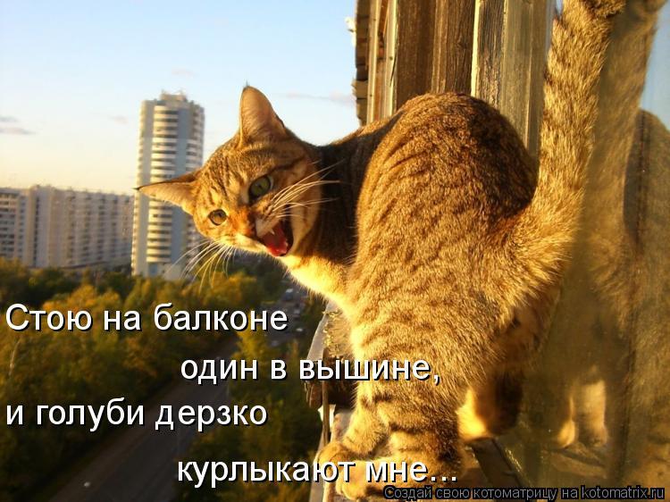 Котоматрица: Стою на балконе один в вышине, и голуби дерзко курлыкают мне...