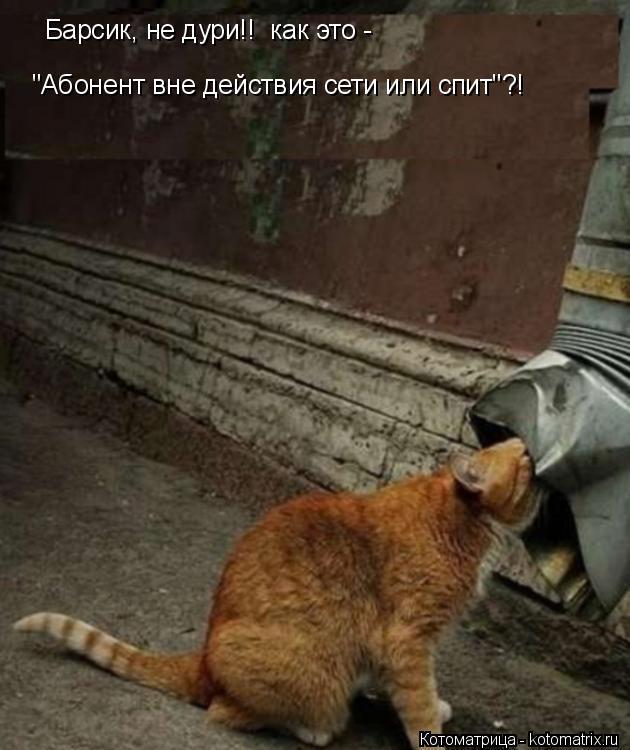 """Котоматрица: """"Абонент вне действия сети или спит""""?! Барсик, не дури!!  как это -"""