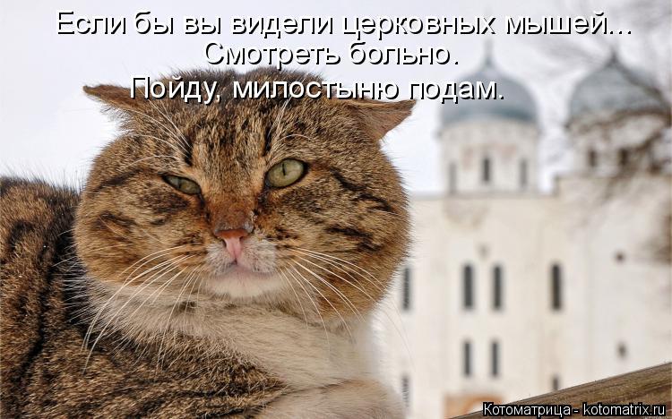 Котоматрица: Если бы вы видели церковных мышей... Смотреть больно.  Пойду, милостыню подам.