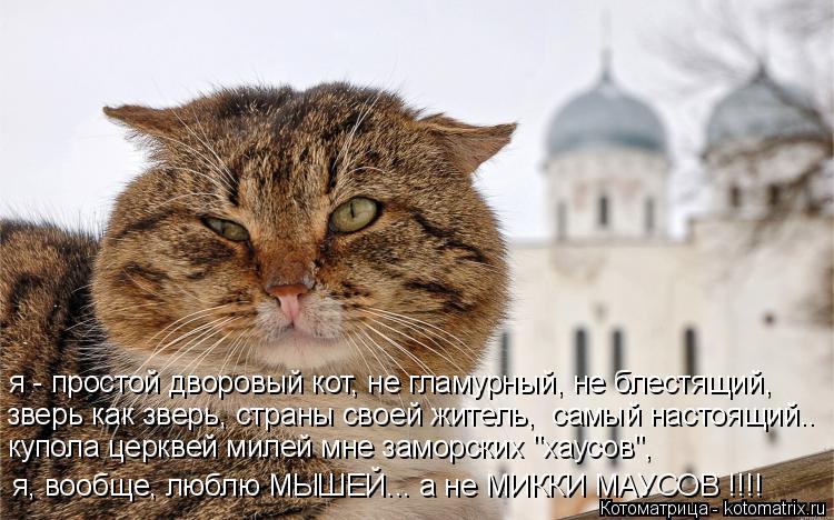 Котоматрица: я - простой дворовый кот, не гламурный, не блестящий, зверь как зверь, страны своей житель,  самый настоящий.. купола церквей милей мне заморс
