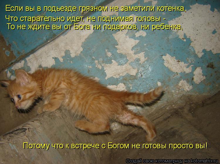 Котоматрица: Если вы в подьезде грязном не заметили котенка,  То не ждите вы от Бога ни подарков, ни ребенка,  Потому что к встрече с Богом не готовы просто
