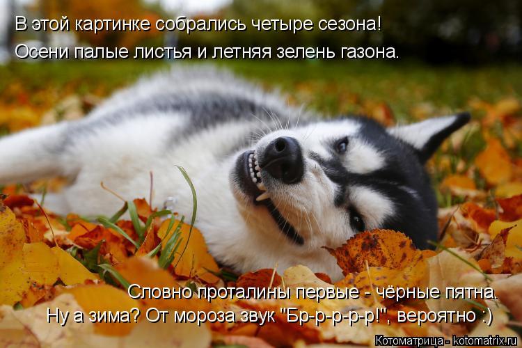 Котоматрица: Осени палые листья и летняя зелень газона. В этой картинке собрались четыре сезона! Словно проталины первые - чёрные пятна. Ну а зима? От мор