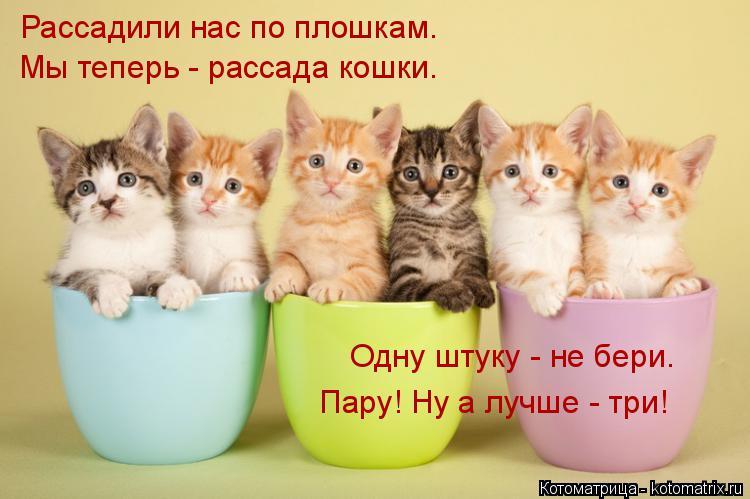 Котоматрица: Рассадили нас по плошкам. Мы теперь - рассада кошки.  Одну штуку - не бери. Пару! Ну а лучше - три!