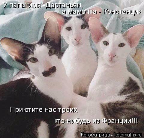 Котоматрица: У папы имя -Дартаньян,  а мамочка - Констанция Приютите нас троих  кто-нибудь из Франции!!!