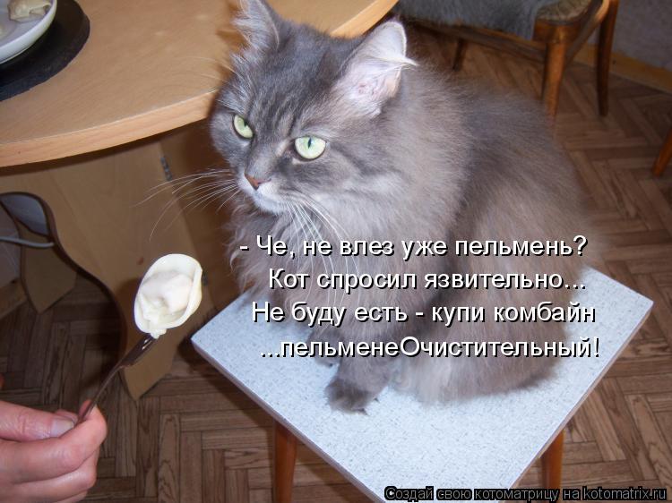 Котоматрица: - Че, не влез уже пельмень? Кот спросил язвительно... Не буду есть - купи комбайн ...пельменеОчистительный!