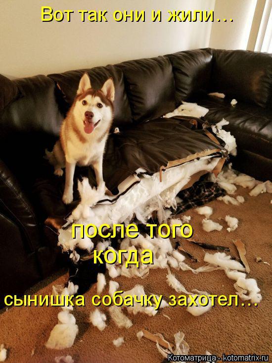 Котоматрица: Вот так они и жили…  после того  когда  сынишка собачку захотел…