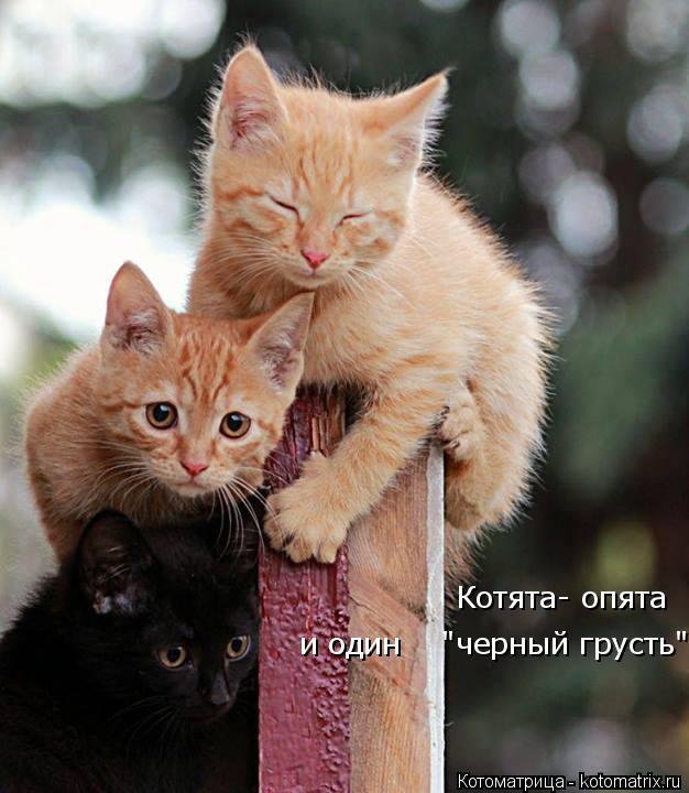 """Котоматрица: и один    """"черный грусть"""" Котята- опята"""