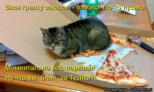 Котоматрица: Вася грелку заказал - озябло что-то пузико. Моментально всю порвали! Ну что вы, блин, за Тузики?!