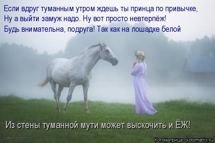 Котоматрица: Если вдруг туманным утром ждешь ты принца по привычке, Ну а выйти замуж надо. Ну вот просто невтерпёж! Будь внимательна, подруга! Так как на л