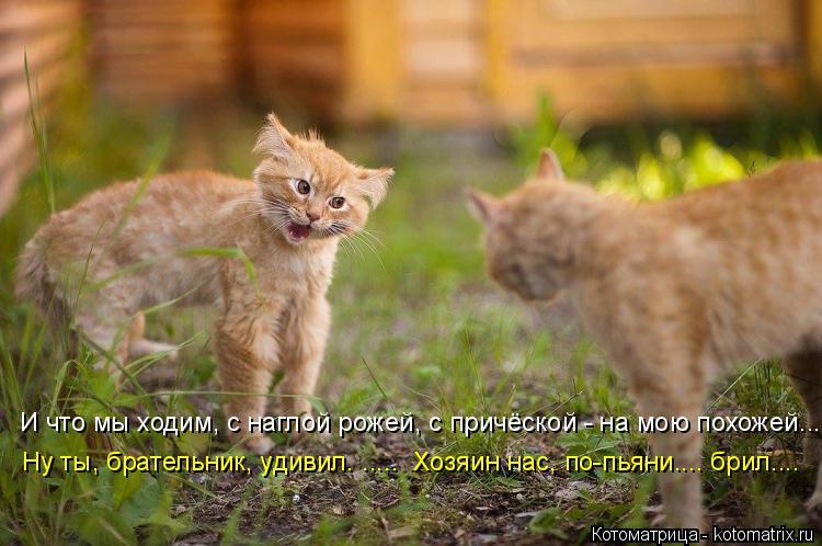 Котоматрица: И что мы ходим, с наглой рожей, с причёской - на мою похожей... Ну ты, брательник, удивил. .....  Хозяин нас, по-пьяни.... брил....