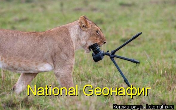 Котоматрица: National Geoнафиг