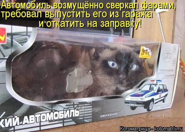 Котоматрица: требовал выпустить его из гаража Автомобиль возмущённо сверкал фарами, и откатить на заправку!