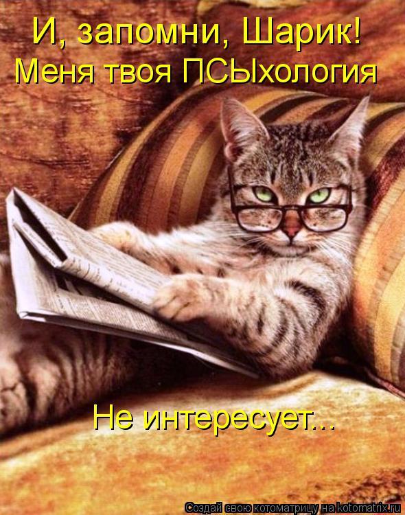 Котоматрица: И, запомни, Шарик! Меня твоя ПСЫхология  Не интересует...