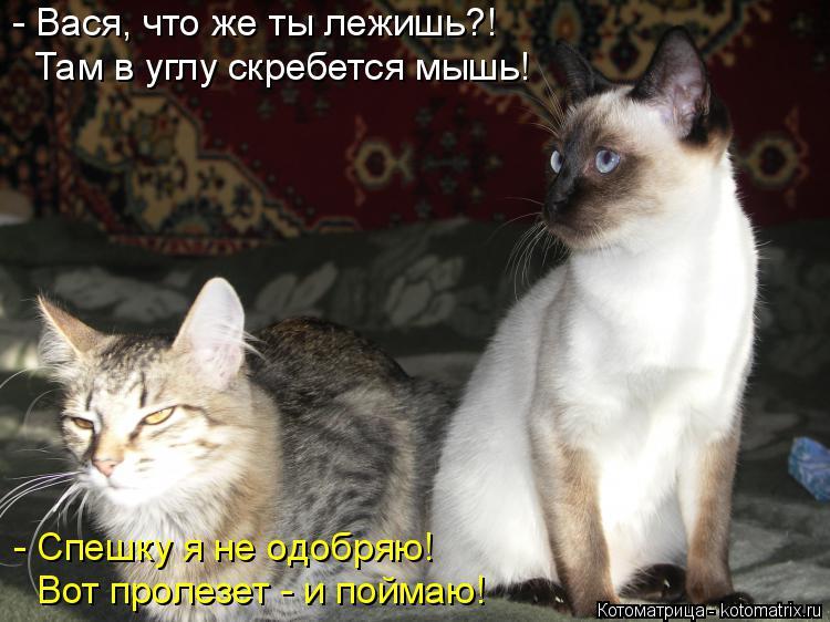 Котоматрица: - Вася, что же ты лежишь?! Там в углу скребется мышь! - Спешку я не одобряю! Вот пролезет - и поймаю!
