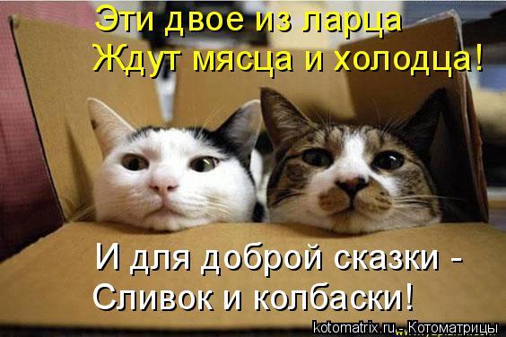 Котоматрица: Эти двое из ларца Ждут мясца и холодца! И для доброй сказки - Сливок и колбаски!