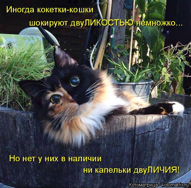 Котоматрица: Иногда кокетки-кошки шокируют двуЛИКОСТЬЮ немножко... Но нет у них в наличии ни капельки двуЛИЧИЯ!