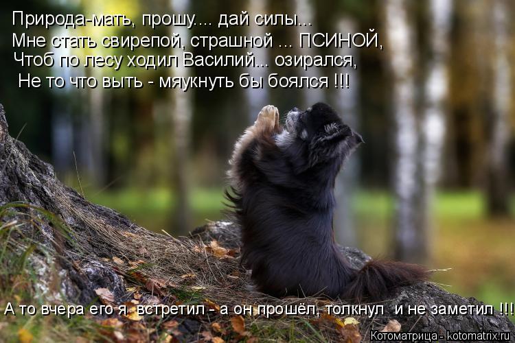 Котоматрица: Природа-мать, прошу.... дай силы... Мне стать свирепой, страшной ... ПСИНОЙ, Чтоб по лесу ходил Василий... озирался, Не то что выть - мяукнуть бы бо