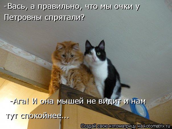 Котоматрица: -Вась, а правильно, что мы очки у  Петровны спрятали? -Ага! И она мышей не видит и нам  тут спокойнее...