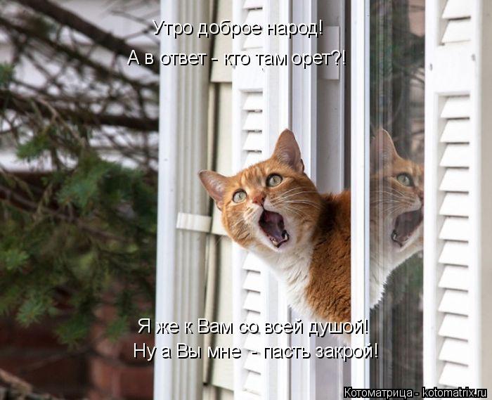 Котоматрица: Утро доброе народ! А в ответ - кто там орет?! Я же к Вам со всей душой! Ну а Вы мне  - пасть закрой!