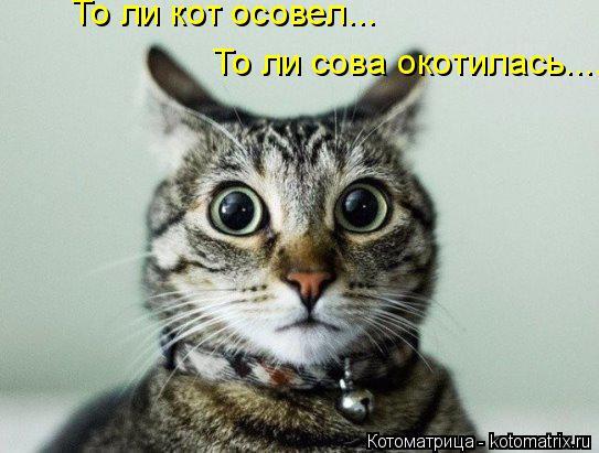 Котоматрица: То ли кот осовел... То ли сова окотилась......
