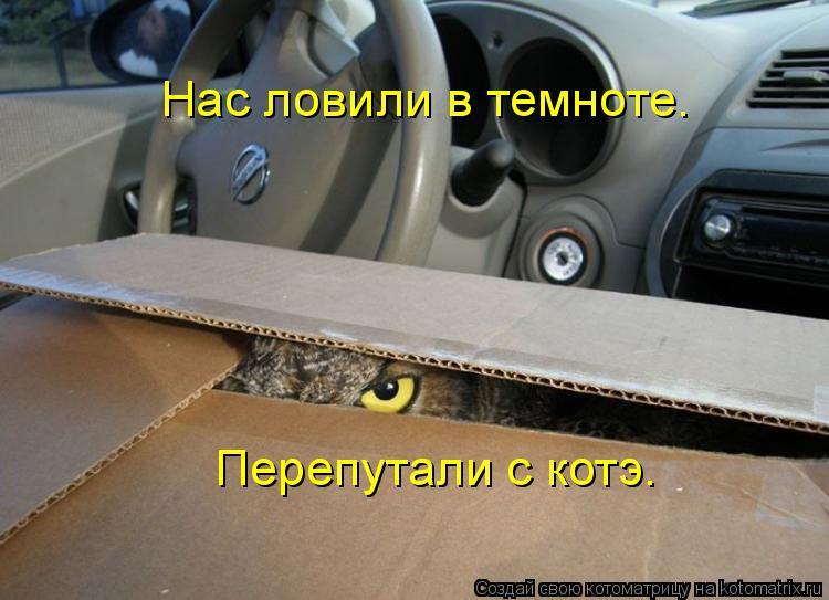 Котоматрица: Нас ловили в темноте. Перепутали с котэ.