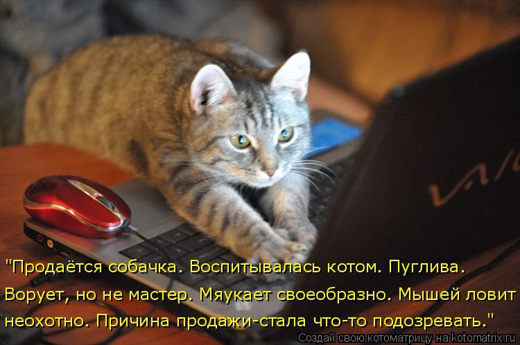 """Котоматрица: """"Продаётся собачка. Воспитывалась котом. Пуглива. Ворует, но не мастер. Мяукает своеобразно. Мышей ловит  неохотно. Причина продажи-стала чт"""