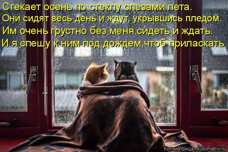 Котоматрица: Стекает осень по стеклу слезами лета. Они сидят весь день и ждут, укрывшись пледом. Им очень грустно без меня сидеть и ждать. И я спешу к ним п