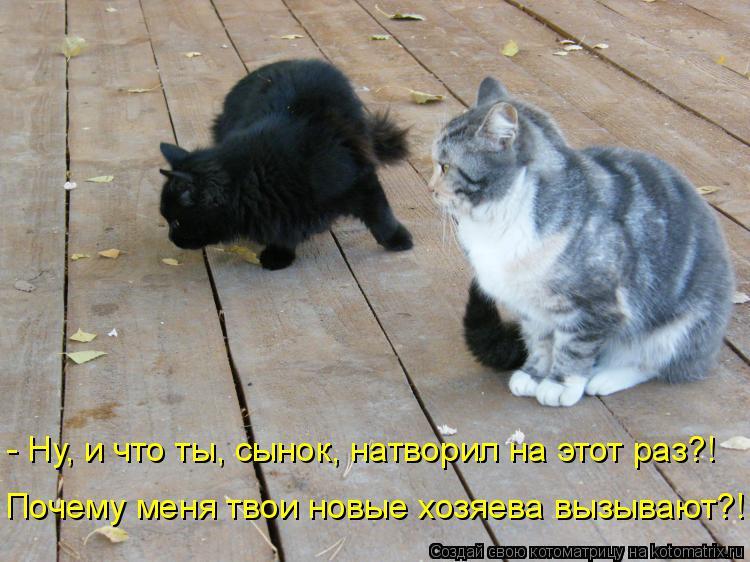 Котоматрица: - Ну, и что ты, сынок, натворил на этот раз?! Почему меня твои новые хозяева вызывают?!