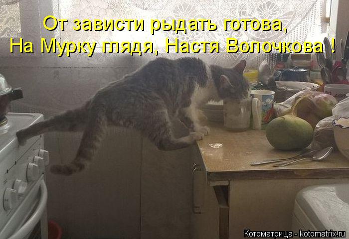 Котоматрица: На Мурку глядя, Настя Волочкова ! От зависти рыдать готова,