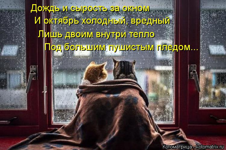 Котоматрица: Дождь и сырость за окном И октябрь холодный, вредный Лишь двоим внутри тепло Под большим пушистым пледом...