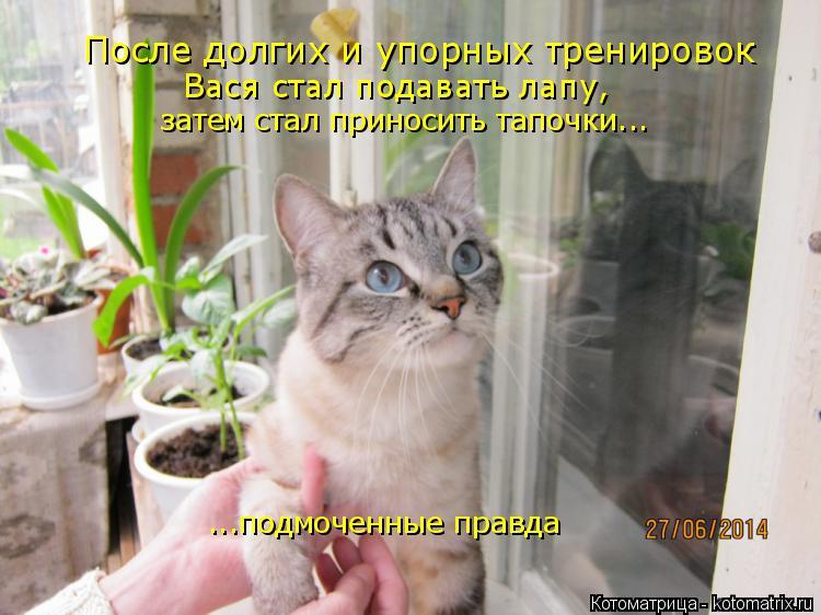 Котоматрица: После долгих и упорных тренировок Вася стал подавать лапу, затем стал приносить тапочки... ...подмоченные правда