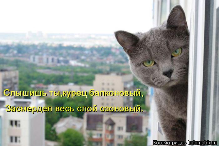 Котоматрица: Слышишь ты,курец балконовый, Засмердел весь слой озоновый.