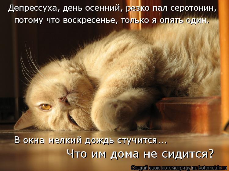 Котоматрица: Депрессуха, день осенний, резко пал серотонин, потому что воскресенье, только я опять один. Что им дома не сидится? В окна мелкий дождь стучи