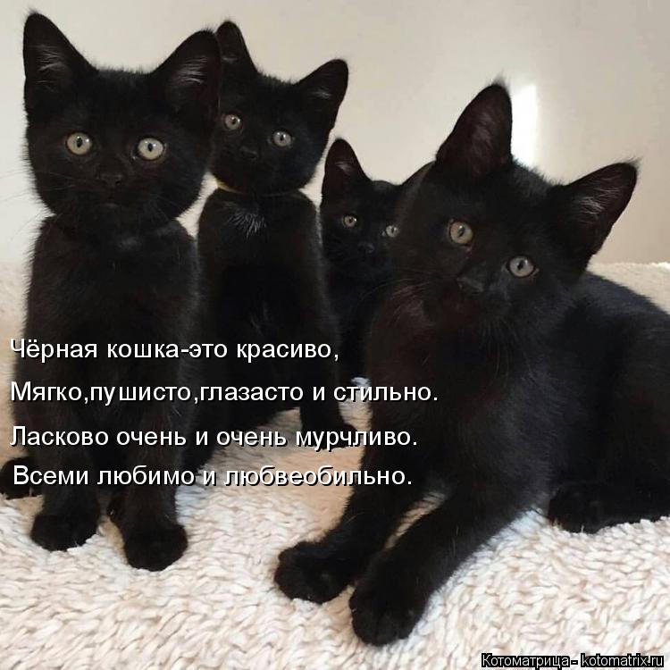 Котоматрица: Чёрная кошка-это красиво, Мягко,пушисто,глазасто и стильно. Ласково очень и очень мурчливо. Всеми любимо и любвеобильно.