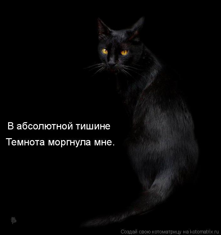Котоматрица: В абсолютной тишине Темнота моргнула мне.