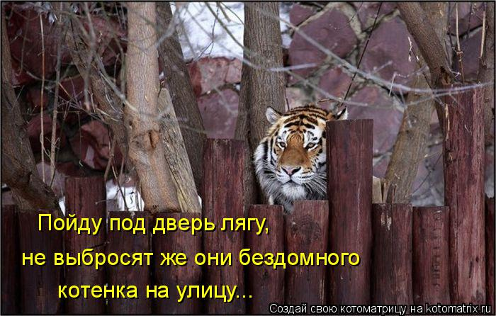 Котоматрица: Пойду под дверь лягу,  котенка на улицу...  не выбросят же они бездомного