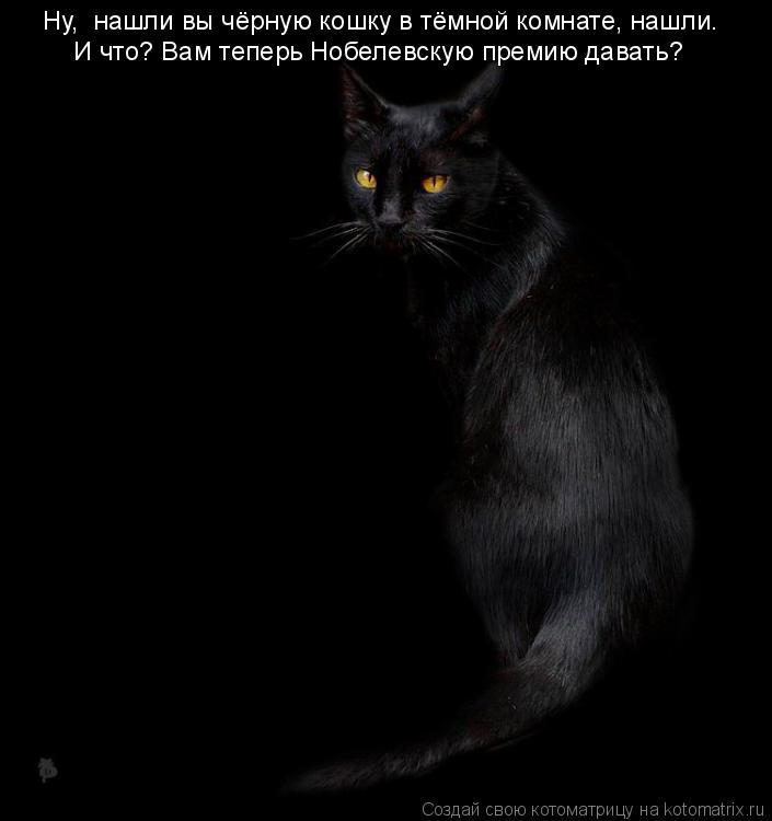 Котоматрица: Ну,  нашли вы чёрную кошку в тёмной комнате, нашли. И что? Вам теперь Нобелевскую премию давать?