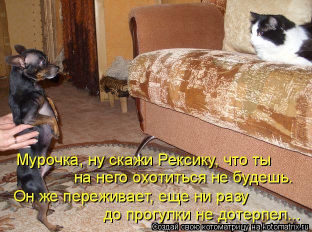 Котоматрица: Мурочка, ну скажи Рексику, что ты  на него охотиться не будешь. Он же переживает, еще ни разу до прогулки не дотерпел...