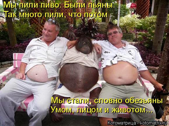 Котоматрица: Мы пили пиво. Были пьяны. Так много пили, что потом Мы стали, словно обезьяны Умом, лицом и животом...
