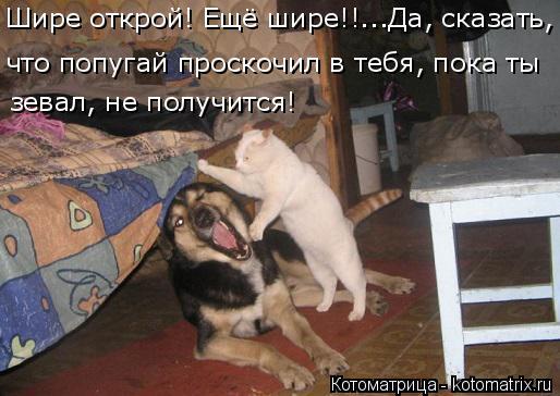 Котоматрица: Шире открой! Ещё шире!!...Да, сказать, что попугай проскочил в тебя, пока ты  зевал, не получится!